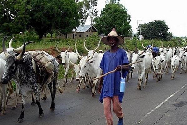 Fulani herdsmen with a motorcyclist arrested at Ohafia.   credits: Stephen Uka