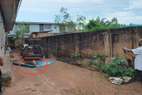 The Decomposing Body of the woman put outside after neighbours discovered it